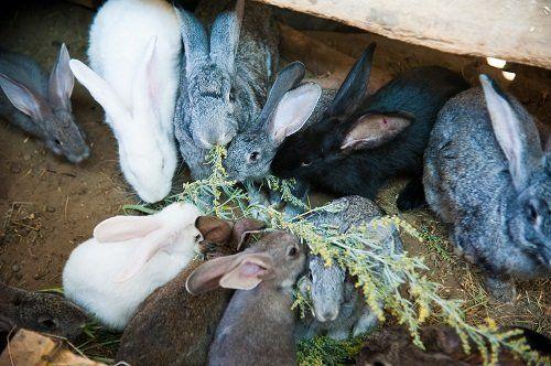 Conigli di vari colori e dimensioni