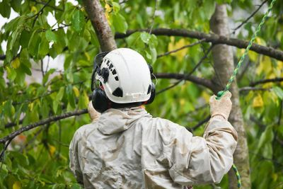 Tree Services Tree Trimmer Fruit Trees Storm Spiders Longmont Co