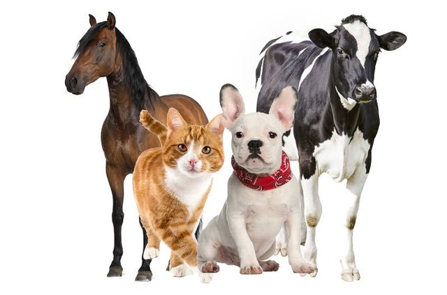 Different types of pets and farm animals