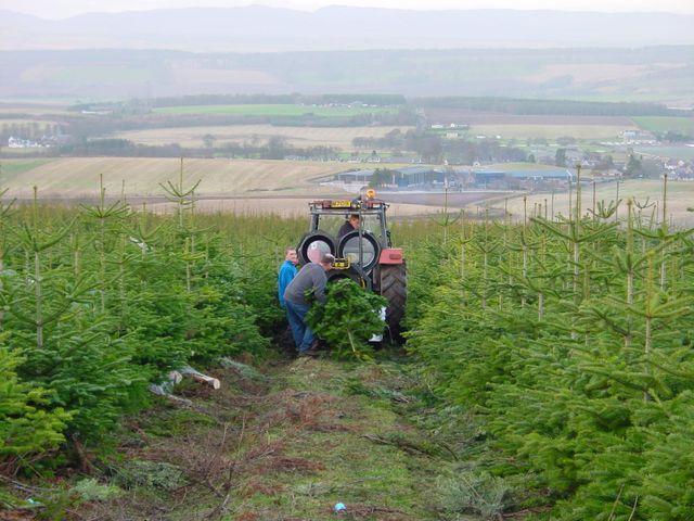 Christmas tree growers