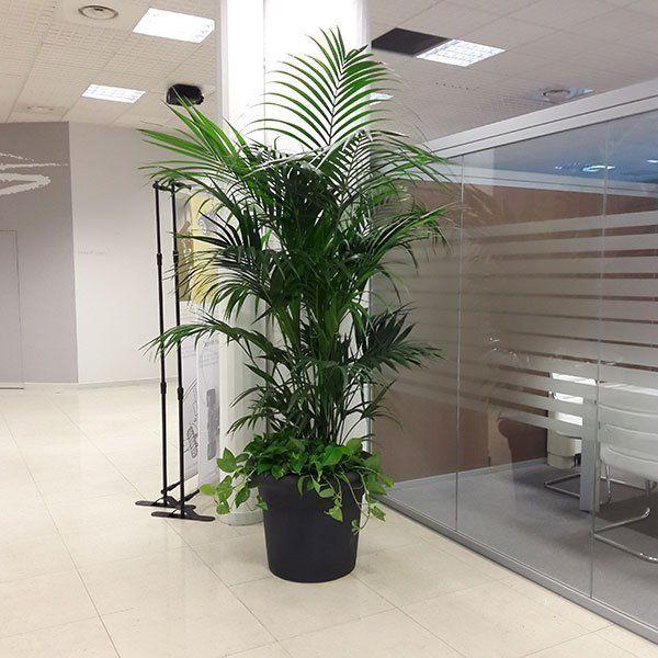 Green life allestimento piante per uffici moncalieri to for Allestimento ufficio