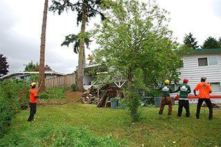 Emerald Coast Tree Service - Stump Removal Service Pensacola FL