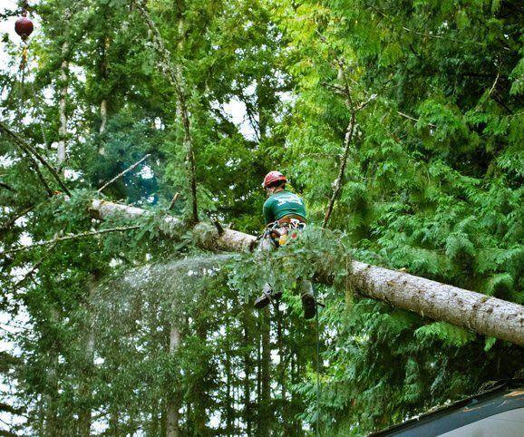 Emerald Coast Tree Service - Fallen Tree Removal Pensacola FL