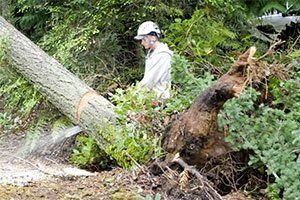 Emerald Coast Tree Service - Stump Removal Service Pensacola FL