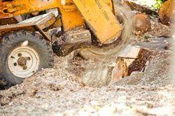 Stump Grinding Service Pensacola FL