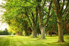 trees in a garden
