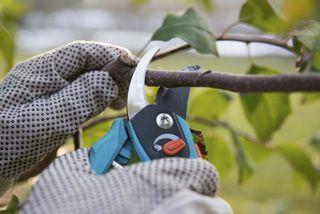 tree pruning Lockport, NY