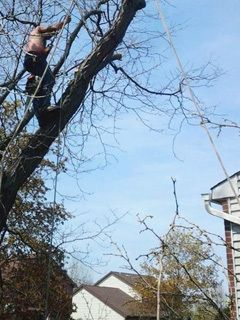 tree pruning Lockport, NY