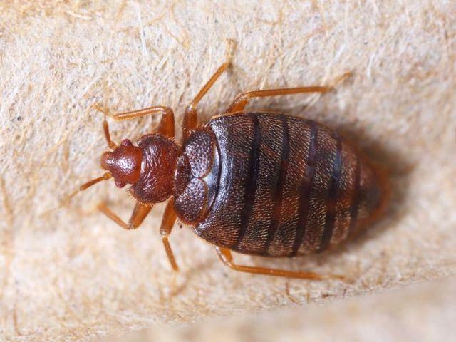 Pest Control Service Bryan, TX