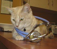 Cat Clinic Greensboro, NC