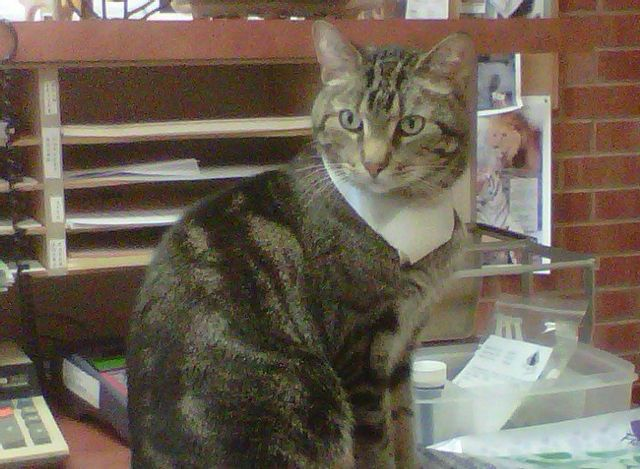 Jake - Cat Clinic Official Greeter