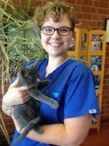 Joshy - Cat Clinic Boarding & Kennel