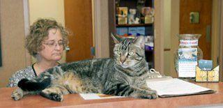 Cat Veterinarian Greensboro, NC