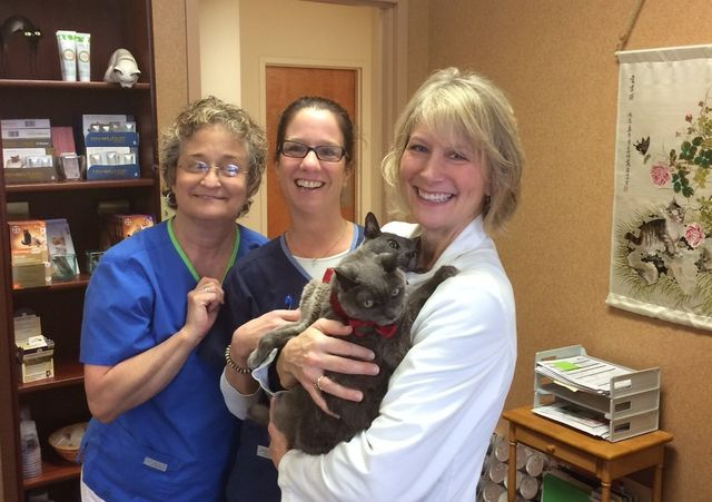 Cat Clinic Staff!