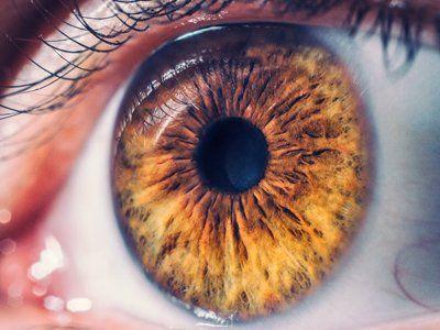 dettaglio di un occhio castano