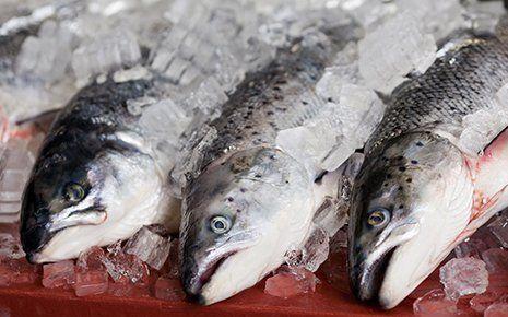 tre pesci freschi con sopra del ghiaccio