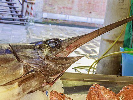 la testa di un pesce spada e accanto altri tre pesci dalle teste arancioni