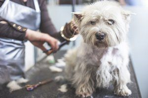 Dog Grooming Courses Hair N Houndz