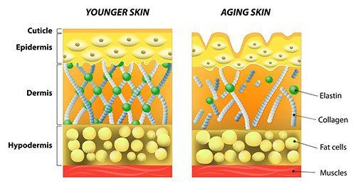 Younger skin vs Aging Skin | RenewAlliance