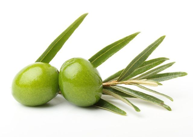 Olive Leaf Extract in Taut Bright | RenewAlliance