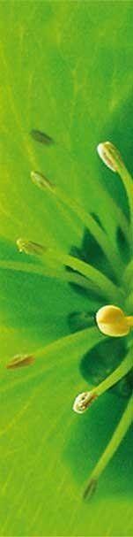 Novità piante