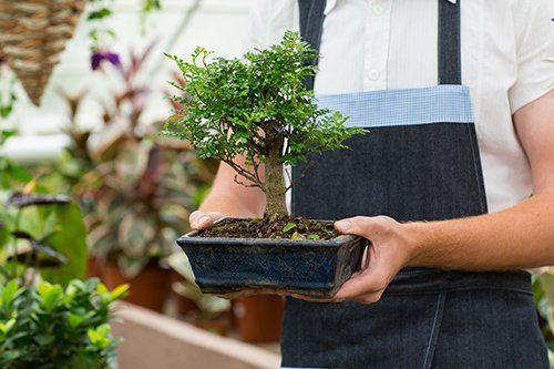 pianta bonsai a Palermo