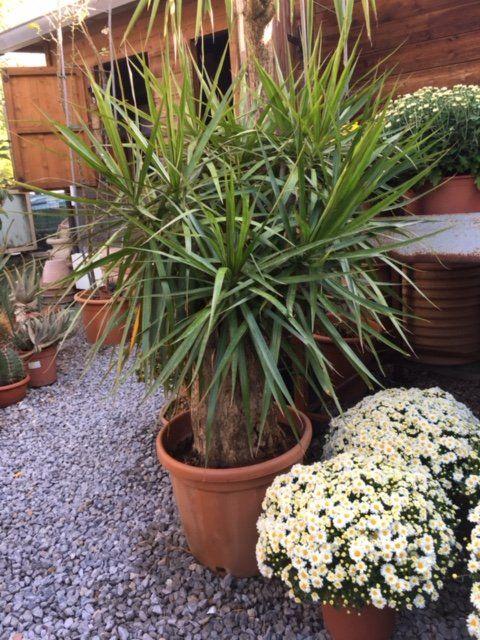fiori e piante in vaso nel vivaio Tumminello a Palermo