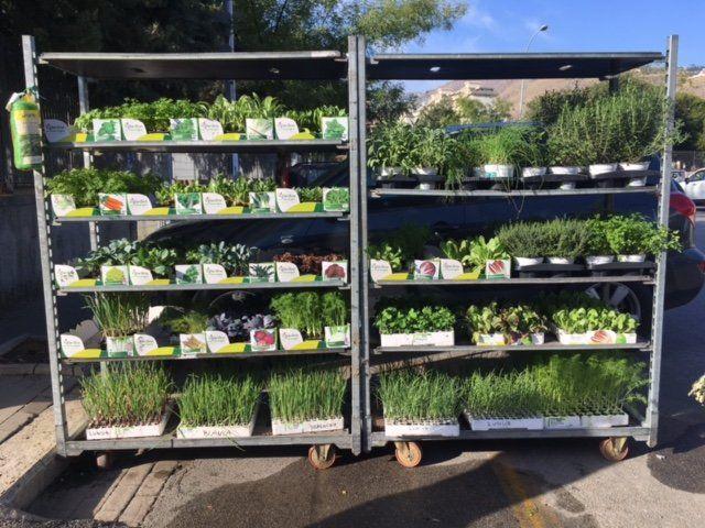 giardinaggio all'aria aperta con i prodotti del vivaio Tumminello