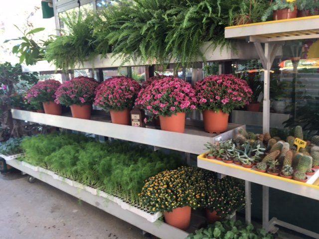 piante in vaso miste al vivaio Tumminello di Palermo