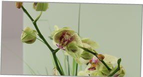 Care service - Ipswich - Frantec - office orchid