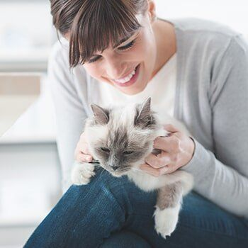 Preventative Care For Cats Murfreesboro Tn Stones