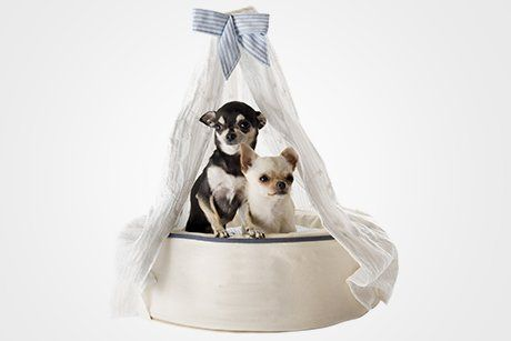 Bedding for animals