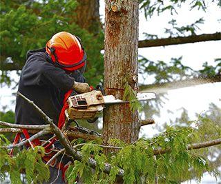 Tree Trimming San Marcos, TX