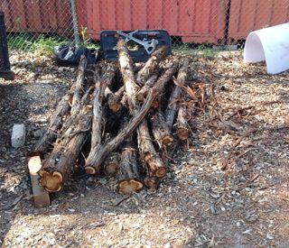 Tree Trimming & Tree Removal Austin, TX