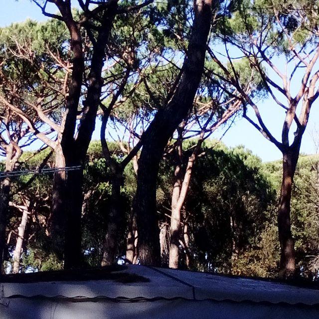 Potatura delle piante a Carrara