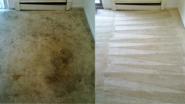Carpet Cleaning Services Greater Miami And South Florida