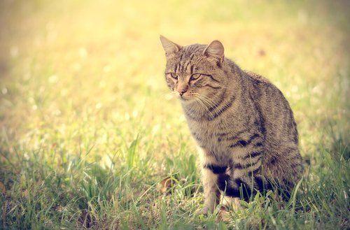 un gatto
