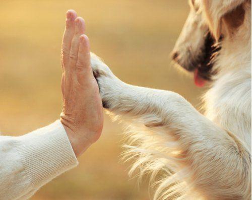 un cane che congiunge una zampa con la mano del padrone