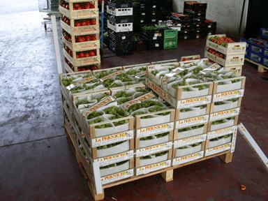 Vendita prodotti orticoli all' ingrosso Arezzo