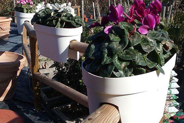 dei vasi bianchi con dei fiori infilati in uno steccato di legno