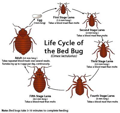 Bed buy life cycle