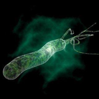 Alla ricerca di l'Helicobacter Pylori