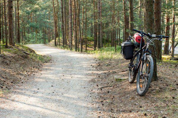 Bicicletta accanto a un albero  in un bosco