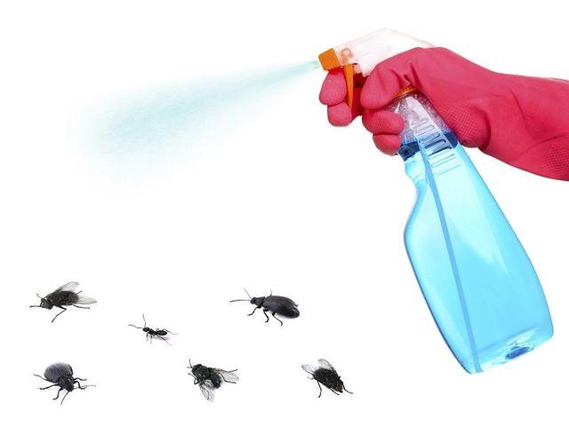 spray per debellare insetti