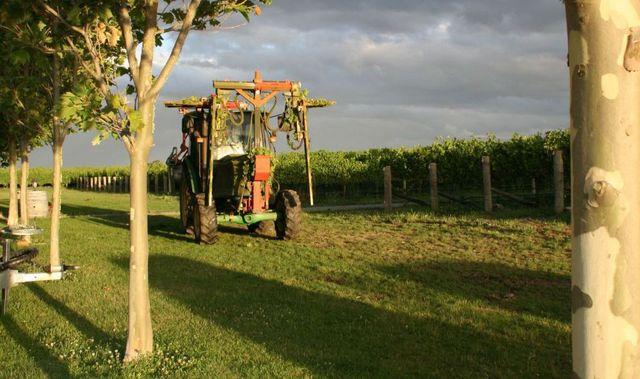 Tractor on vineyard
