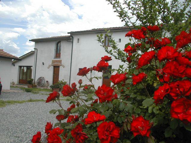 Primo piano di rose rosse in giardino
