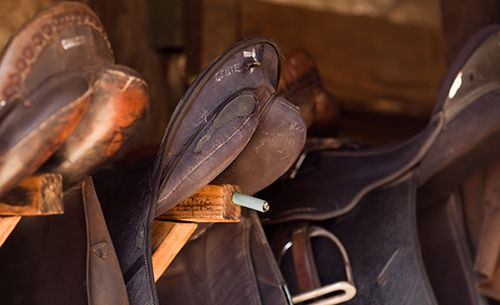 Range of saddle supplies in Los Ranchos, NM
