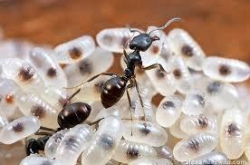 ant control in Motueka