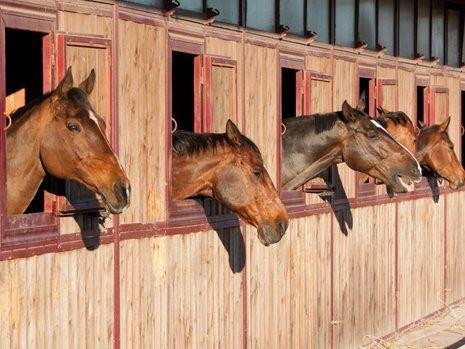 Cavalli nella stalla a San Francesco al Campo