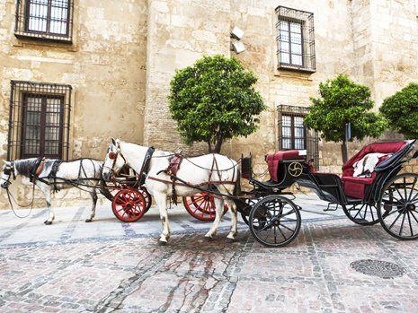 Carrozza con cavalli bianchi per matrimonio a San Francesco al Campo